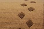 Изработка и продажба на ръчно вързани индийски килими Индо Непал